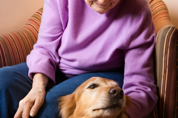 Haven Care Activities | Animal Therapy